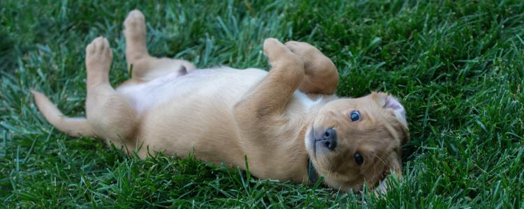 main of Is Your Family Ready to Adopt a Puppy? There Are Many Things to Consider