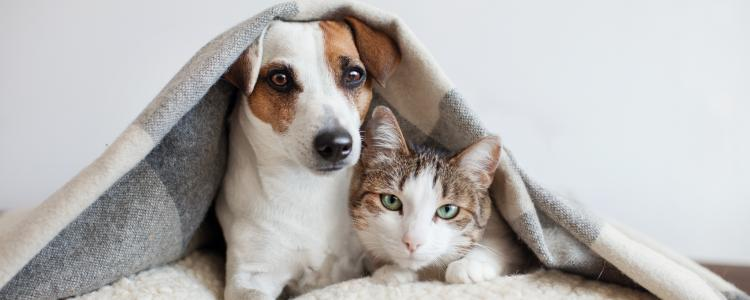 main of Help Your Pets Avoid Fleas and Ticks