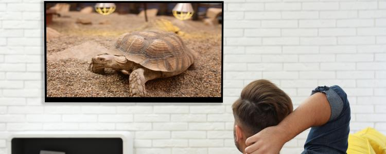 main of Which TV Is Actually The Best Smart TV?